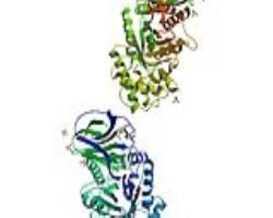 نشانگرهای بالینی بیماری پارکینسون