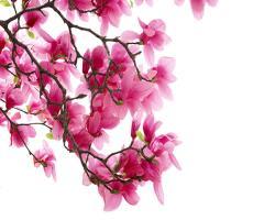 بهار در راه است . . .