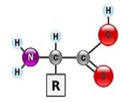 بهبود کیفیت غذا با توزیع مناسب اسیدهای آمینه ضروری