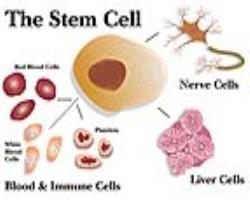 جشنواره سلولهای بنیادی و پزشکی  بازساختی راهی برای رسیدن علم به صنعت است