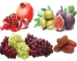 بررسی اثرات سینرژیستی میوههایقرآنی در شرایط آزمایشگاهی